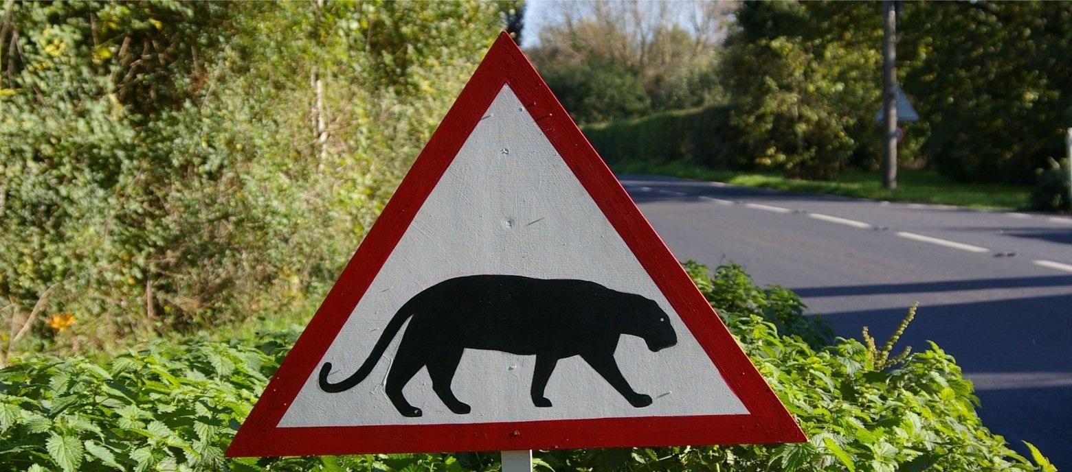 big cat conversations banner